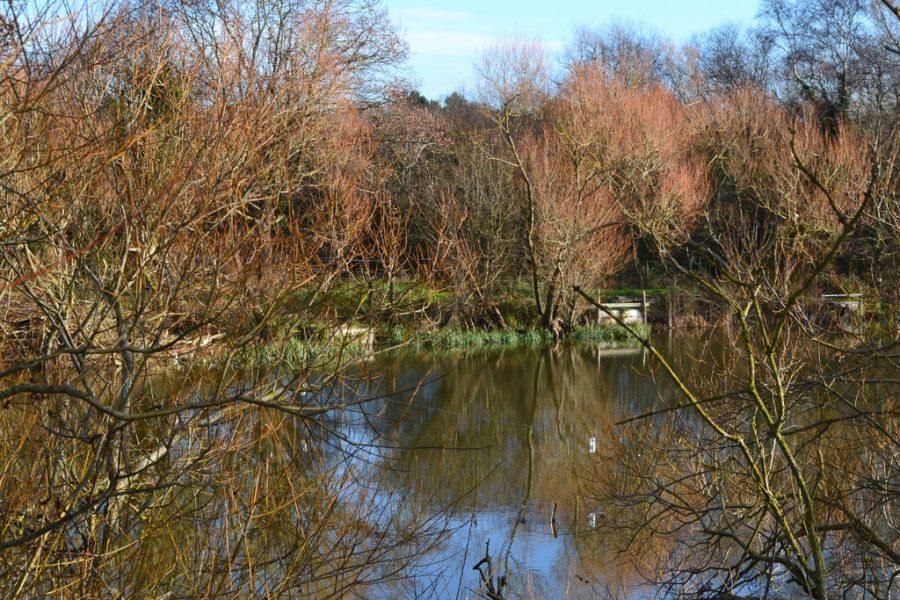 Sandhill Pond in Alver Valley