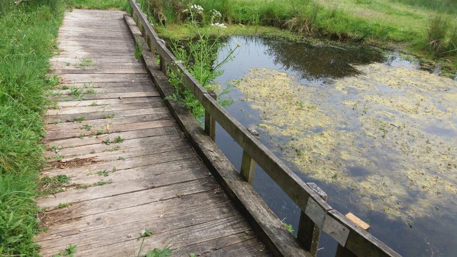 boardwalk by a pond in alver valley